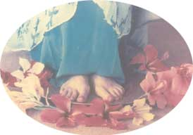 Lotus feet of The mother